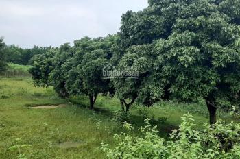 Cần bán 5200m2 đất phù hợp làm nhà xưởng hoặc nhà vườn giá rẻ tại Lương Sơn - Hòa Bình