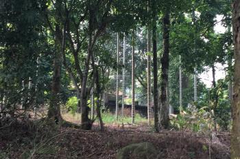 Cần bán lô đất 2900m2 đã có khuôn viên tường bao xung quanh giá rẻ tại Vân Hòa, Ba Vì, Hà Nội