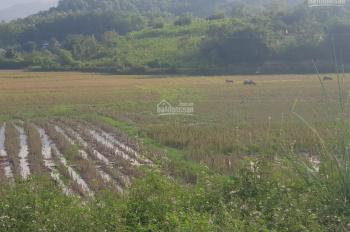 Bán gấp 7000m2 đất nằm sát khu nghỉ dưỡng Resot Vịt Cổ Xanh, Beverly Hill tại Xã Cư Yên, Lương Sơn