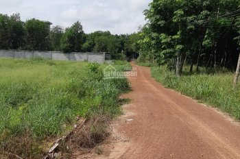 Chính chủ bán 537m2 ở ấp 3 thị trấn Chơn Thành, Bình Phước