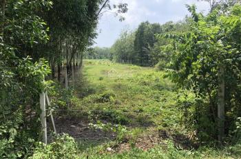 Bán đất Củ Chi, Xã Phú Mỹ Hưng, Huyện Củ Chi, TP Hồ Chí Minh 15x71m=1068m2