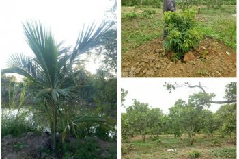 Bán vườn Vải Bơ 1,8ha đất thổ cư và CLN giá rẻ, xã Vụ Bổn, huyện Krông Pắk, tỉnh Đắk Lắk