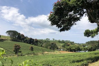 Khu view hồ tại Bảo Lâm giá 300 triệu/ nền, gần KDL thác Dambri có SHR từng nền