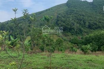 Bán  18 sào DT 6400m2 đất trang trại nhà vườn tại tiến xuân thạch thất, giá 250tr/ sào.