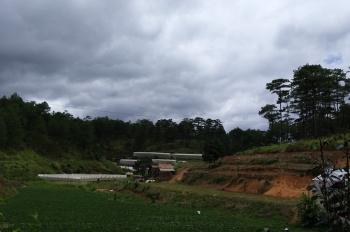 Chính chủ cần bán gấp 8 sào đất nông nghiệp gần đường Lâm Văn Thạnh, Phường 11, Đà Lạt