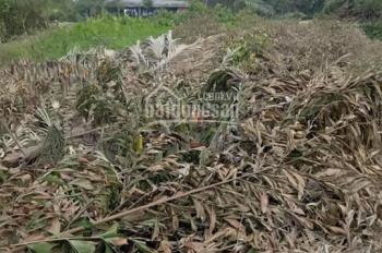 Cần bán 1971m2 mặt tiền sông Vàm Cỏ, đất vườn thuộc ấp 1B, xã Hựu Thạnh, Đức Hòa, Long An