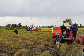Bán đất CLN Cát Lái, Phú Hữu - Nhơn Trạch - Đồng Nai, DT 1847m2, giá 1,3 tỷ/1000m2, LH 0967567807