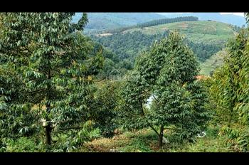 Bán vườn sầu riêng 8500m2 mặt tiền Quốc Lộ 20 view suối đẹp, giá bán 6,2 tỷ