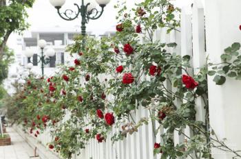 Bán gấp 2 suất ngoại giao dự án The Eden Rose, 82.5m2, giá 6.5- 7.5tỷ, view vườn hoa. LH 0986050763
