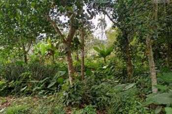 Bán gấp 3244m2 đất ở tại thôn Hạnh Phúc, Hòa Sơn, Hòa Bình