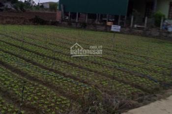 Bán đất nền Sổ hồng thổ cư xã Hiệp An, Đức Trọng: 4 lô diện tích 150m2 - Giá 1,3 tỷ