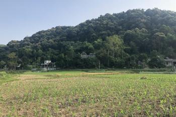 Bán 5ha đất trang trại 50 năm tại xã Hợp Châu, Lương Sơn, giá 250 triệu/ha. LH: 0988168636