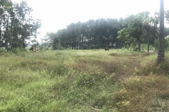 Cần bán đất làm kho xưởng, 1 sẹc Nguyễn Thị Rành, xã Nhuận Đức, Củ Chi