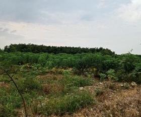 Cần bán 42000m2 (4.2ha) đất bằng đẹp, mặt tiền đường 400m