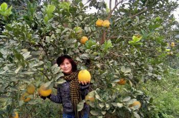 Chính chủ bán nhà và vườn 800 m2 huyện Quốc Oai, cách Hoà Lạc 6 km, DT: 800m2, LH: 0937762386