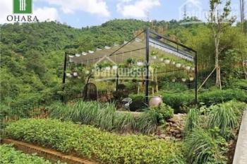Cần bán 1 lô farm tại dự án Hasu tại Kỳ Sơn chỉ   399tr