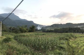 Bán đất làm trang trại, nghỉ dưỡng khu vực Ba Vì view cánh đồng tuyệt đẹp dt: 5100m2 giá 2,4 tỷ