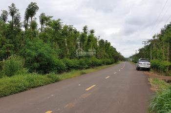 Cho thuê đất mặt tiền đường nhựa lớn 6872m2: Sông Xoài - Cù Bị, thị xã Phú Mỹ, TP Bà Rịa