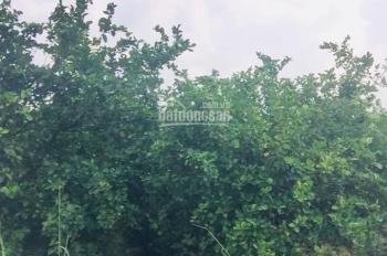 Đất vườn trồng chanh tại Thạnh Hóa, LA, giá 680tr/1010m2, SHR, LH: 0909189915, giá còn TL