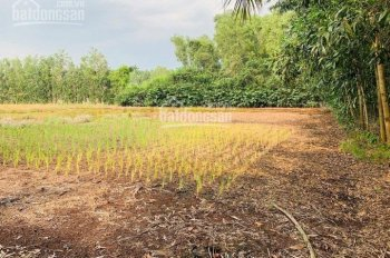 Bán đất Phú Đông quy hoạch ONT, xây nhà vườn bao đẹp, 0907906222