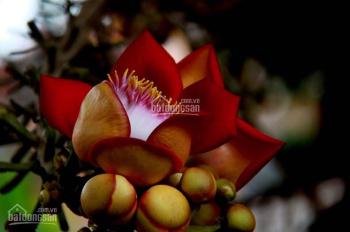Sala garden, Nghĩa trang cao cấp nhất Long Thành Đồng Nai, LH 0968245048