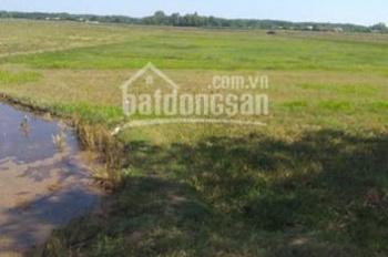 Bán đất nông nghiệp đường tỉnh lộ 7 xã An Nhơn Tây huyện Củ Chi.DT=80.000m2