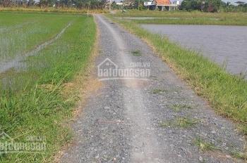 Đất siêu rẻ cho khách đầu tư giai đoạn đầu F1 tại Ấp Bình Lợi - X. Hòa Khánh Đông - Huyện Đức Hòa