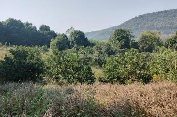 Cần bán 1,3ha đất tại thôn Bùi Trám - Hòa Sơn - Lương Sơn - Hòa Bình