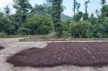 Về quê định cư bán gấp mảnh vườn 16,7 sào có 369m mặt tiền đường bê tông trồng cà phê, giá siêu rẻ