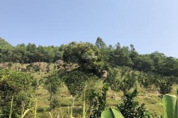 Nhượng QSD 3800m2 đất làm trang trại nhà vườn tại Tiến Xuân, Thạch Thất, giá 280tr/sào