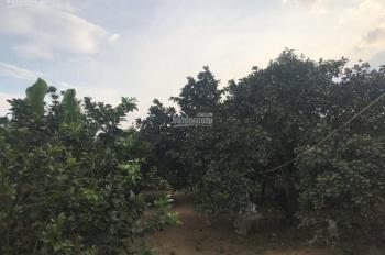 Bán vườn bưởi Tân Triều, Tân Bình, Vĩnh Cửu, mặt tiền Bình Lục