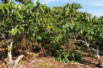 Cần sang lại vườn cà phê đang thu hoạch, 174m2, có thổ cư