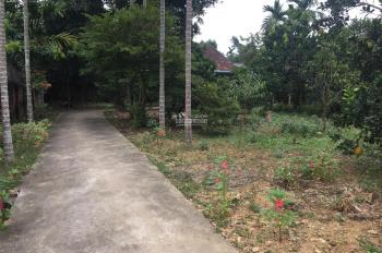 Cần bán lô đất 970m2, đã có khuôn viên nhà vườn hoàn thiện tại Yên Bình, Thạch Thất, Hà Nội