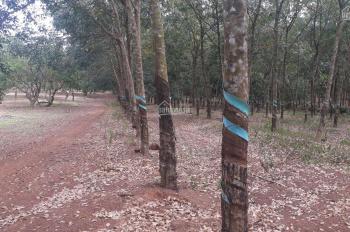 Bán đất mẫu 63200m2 xã Tân Định, Bắc Tân Uyên, Bình Dương
