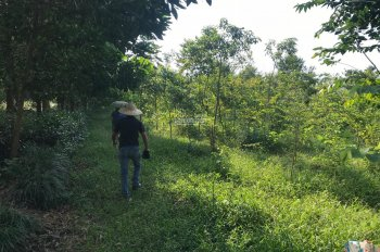 Bán đất nghỉ dưỡng, nhà vườn, khu du lịch Phú Mãn Quốc Oai giá rẻ
