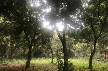 Bán đất ở Vân Hòa, Ba Vì ngay cổng vườn Quốc Gia 3000m2 giá 1tr/m2, ĐT 0982853734
