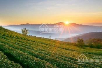 Bán đất khu du lịch đồi chè Cầu Đất 2100m2 đất nông nghiệp, Trạm Hành, TP Đà Lạt
