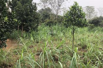 Bán 837m2 đất thích hợp trang trại nhà vườn tại xã Vân Hoà, Ba Vì, Hà Nội. Giá 650 triệu