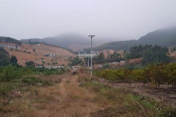 Bán đất trang trại tại Đông Triều - Quảng Ninh
