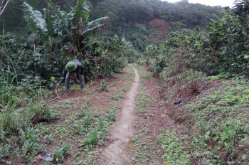 Cần ra nhanh lô đất NN tại Xuân Trường DT 1 héc cách Quốc Lộ 20 2km
