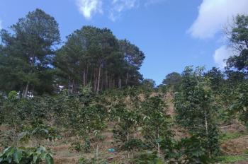 Cần bán gấp lô đất NN tại Xuân Trường, Xuân Sơn, DT 8000m2 có 1 sào làm nhà kính