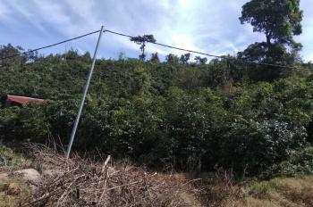 Cần bán lô đất NN tại Xuân Trường, Xuân Sơn DT 3600m2