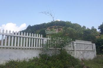 Chỉ 260tr/sào sở hữu ngay nửa quả đồi tuyệt đẹp sát thung lũng Bản Xôi tại Ba Vì, LH 0981824289