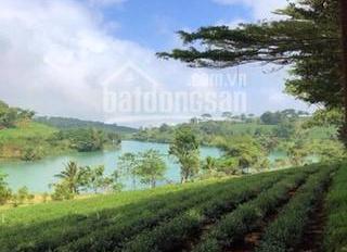 Phân phối đất nền đầu tư nghỉ dưỡng tại Bảo Lộc, quy mô rộng lớn full thổ cư có sổ