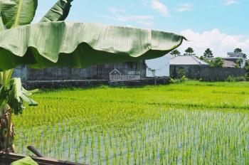 Chính chủ cần bán gấp đất sào Xuân Phú, Xuân Lộc, Đồng Nai