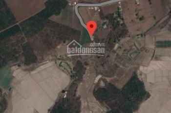 Bán gấp 181m2 - 100m2 thổ cư xã Phú Hội, Đức Trọng, Lâm Đồng, 420 triệu. LH: 0931.41.51.51