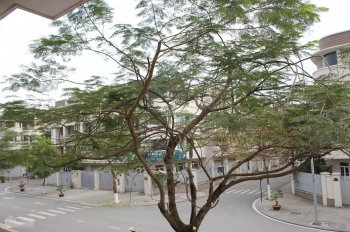 Bán liền kề biệt thự kinh doanh văn phòng nhà ở khu đô thị An Hưng - Dương Nội - Hà Đông 0966658965