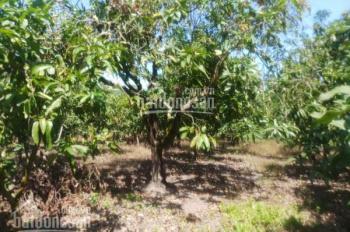 Bán gấp 2530m2 đất vườn, giá 470 triệu ở Túc Trưng, Định Quán, Đồng Nai, LH: 0978962992