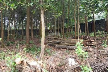 Bán 170m2 đất, ngã tư Tiến Xuân, ngay cổng phụ đại học Quốc Gia, giá 1 tỷ 250, 0978659546