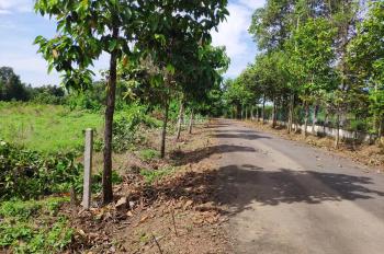 Bán đất Trị An, Vĩnh Cửu, 12.5x25m